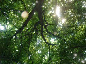 Entitati de lumina in Padurea Baciu